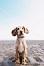 Ferien mit dem Hund die Ultimative Checkliste